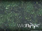 WildFly Desktop Background
